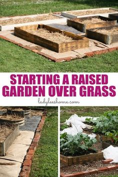 Do you want to turn your lawn into a productive vegetable garden? Let me show you how start a raised garden over grass in five simple steps. #raisedvegetablegarden #turnlawnintogarden #raisedbedgarden Organic Vegetables, Growing Vegetables, Gardening For Beginners, Gardening Tips, Urban Gardening, Gardening Services, Gardening Quotes, Garden Pests, Garden Tools