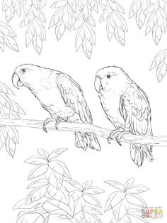 Eclectus Parrot Coloring Page From Parrots Category Select 26073 Printable Crafts Of Cartoons Nature Animals Bible And Many More