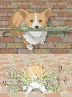 Corgi and the umbrella
