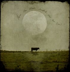 """Leapfrog... by jamie heiden, via Flickr """"and the moon jumped over the cow."""""""