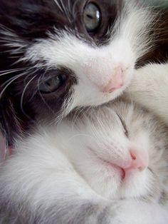 cute cat 7 Daily Awww: Fluffy kitty cats (31 photos)