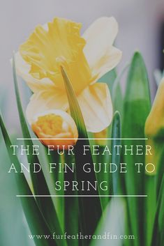 Spring is one of the most beautiful times of the year, with a broad range of activities and events to enjoy. Check out our guide to the season here. When Does Spring Start, Spring Starts, April Easter, Easter Weekend, Most Beautiful Gardens, Wish You The Best, Chelsea Flower, Country Life