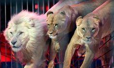 Pétition : Interdiction des cirques comportant des spectacles d'animaux dans notre commune