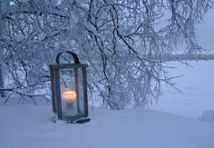 Winter Magic, Winter Snow, Winter Christmas, Merry Christmas, Let It Snow, Charlie Brown, Winter Wonderland, Holidays, Outdoor
