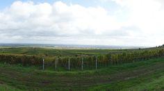 Dieser Ausblick auf die Weinreben ist fantastisch. Wenn die Trauben reif sind, werden sie geerntet und zu leckerem Wein verarbeitet. Rheinland-Pfalz ist bekannt für seine hervorragenden Weine. Außerdem gibt es in der Pfalz schönen Schmuck. Besuchen sie unsere Seite www.jewels24.de um weitere Informationen zu erhalten. #weinrebe #traube #pfalz #weinlese