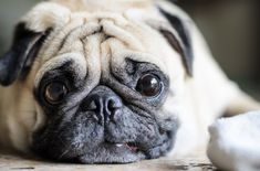 3 Reasons your dog may be gaining weight