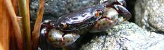 Crab - Photo taken in Prince Rupert, BC. Max Mara, My Passion, Trips, Prince, Photography, My Crush, Traveling, Travel, Fotografie