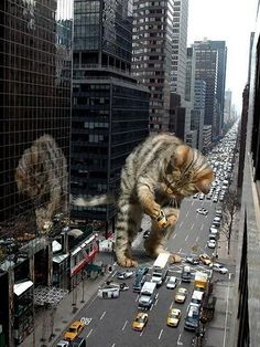 Catzilla has striked again! Wait not again. Catzilla has striked on no notice! There, thats better. I Love Cats, Crazy Cats, Cool Cats, Funny Cats, Funny Animals, Cute Animals, Funniest Animals, Giant Cat, Gatos Cats
