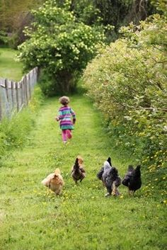 Free-range chickens & children....just how it should be!! K