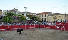 Santacara: Vacas de Jose Arriazu - Dia de la Mujer Año 2016 (... Dolores Park, Cows, One Day, Women