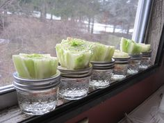 Re-growing Lettuce...I'm trying this tomorrow!!