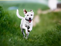 Ask the Trainer: How Do I Teach My Dog to Come When Called?