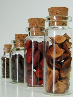 Magnolia,  Honey Locust, Mimosa & Bald Cypress Tree Seeds in Glass vials with All natural cork  by RocksandVines