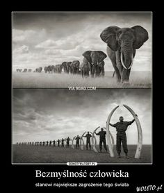 Daily Quotes, Ecology, Animals And Pets, Haha, Elephant, Anime, Humor, World, Memes
