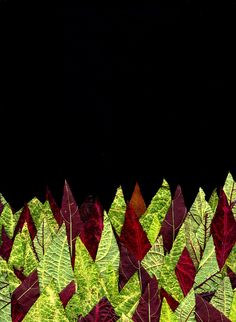 Solenostemon by Horticultural Art