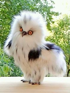 This beautiful owl wasn't labeled so I'm not venturing a guess. Love it's coloring and child fluffiness.