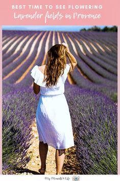 10 France Lavender Fields In Provence Ideas In 2020 Lavender Fields France Lavender Fields Provence Lavender Fields