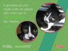 Dia 4 de abril, Dia Mundial dos Animais de Rua!!    A grandeza de uma nação pode ser julgada pelo modo que os animais são tratados.     Conheça mais sobre o trabalho do Projeto Vida Animal  Acesse: www.projetovidanimal.com.br    #AdoteNaoCompre #Gatos #Cats #Divulgue #ApadrinheUmAnimal
