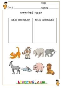 Classify the Pictures Worksheets,Teacher Printable Worksheets,Kindergarten Curriculam