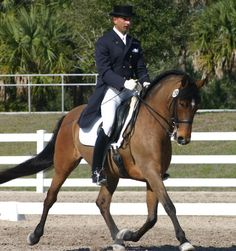 He looks like to my horse :)