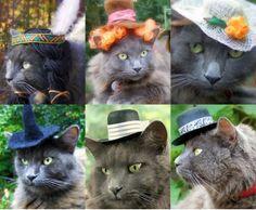 lol...poor cat in a hat!
