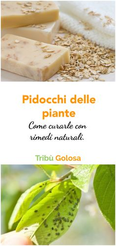 Home Remedies, Celery, Cantaloupe, Fruit, Vegetables, Nature, Flowers, Plants, Tutorials