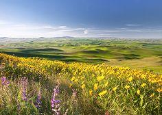 Palouse Hills in Idaho - Google Search
