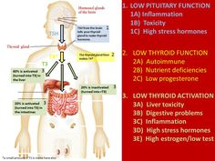 About Hypothyroidism A Common Health Problem By hypothyroidism, the thyroid gland is producing too less hormones to stimulate the metabolism or the body is not able to utilize the hormones. The lack of thyroid hormones slows down the Thyroid Disease Symptoms, Thyroid Test, Low Thyroid, Thyroid Issues, Thyroid Hormone, Thyroid Problems, Thyroid Health, Hypothyroidism Diet, Autoimmune Disease