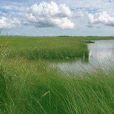 Fishing the marsh in fields of green.