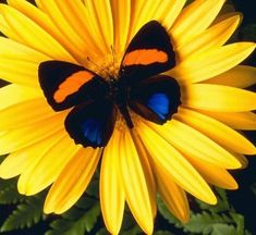 Butterfly and colors