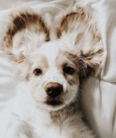 All dogs are cute and adorable, but we took some of the most popular choices out there to develop this list of the 20 cutest dog breeds. Puppies breeds The 20 Cutest Dog Pictures Cute Dogs Breeds, Cute Dogs And Puppies, I Love Dogs, Doggies, Cutest Dogs, Cutest Puppy, Puppies Tips, Fluffy Puppies, Teacup Puppies