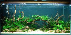 . Aquarium Driftwood, Tanks, Shelled, Military Tank, Thoughts