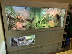 Ackie Monitor Lizard Enclosure My Yellow Ackie Monitor enclosure build with built in storage and end bookshelf. Monitor Lizard, Happy Animals, Animals And Pets, Lizard Cage, Dual Monitor, Reptile Room, Reptile Terrarium, Animal Room, Reptile Enclosure