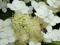 NC Small Fruit & Specialty Crop IPM: Upcoming pollinator presentation at NC State