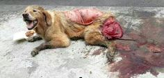 Sign this petition and make it STOP Thousands of dogs and cats are skinned alive and eaten every year for pet meat festivals. Stop the slaughter! (79152 signatures on petition)
