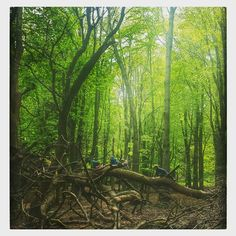 Human centipede train in the woods today. Spot the children. Looking Up, Dublin, Woods, Ireland, Train, Children, Nature, How To Make, Painting