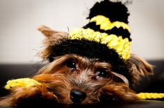 fdd8657f342 Steelers Pet · This would make Dad walking B a little nicer... Pittsburgh  Steelers Dog Hat