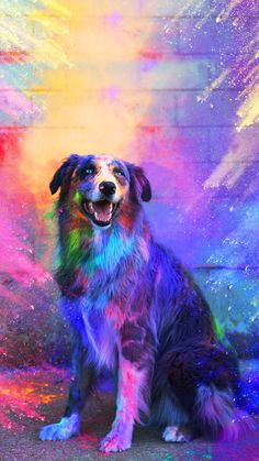 bunte Tiere 25 iPhone and iPad Apps for Smart Girls - dog - Puppy Wallpaper Iphone, Cute Dog Wallpaper, Animal Wallpaper, Wallpaper Wallpapers, Puppies Wallpaper, Emoji Wallpaper, Trendy Wallpaper, Heaven Wallpaper, Bright Wallpaper