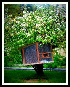 Birds' tree house at Stymfalia place.