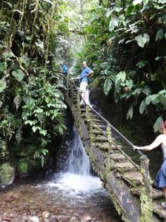 Bridge leading to the Reina Waterfall, Mindo, Ecuador