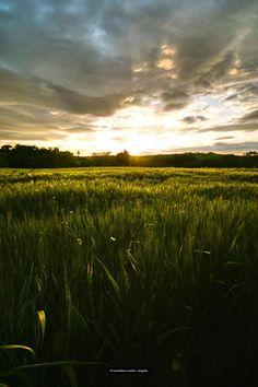 il grano é ancora verde by Massimiliano Amadori on 500px
