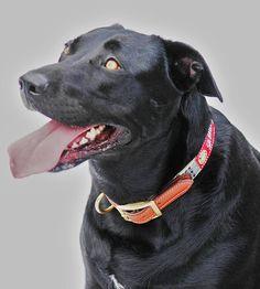 #bakerdog #barndog #bakerblanket #bakercollar from www.bakerblanket.com