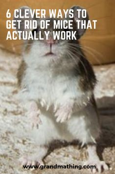 In this post, I'm going to show you how to get rid of mice naturally. You're not going to believe some of the clever ways I share with you, but they actually work! get ride of mice in house, get rid of mice in house diy, get rid of mice in house tips. Diy Gifts For Grandma, Grandmother Gifts, Up House, House Mouse, Killing Mice, How To Deter Mice, Getting Rid Of Rats, Glue Traps, Reno