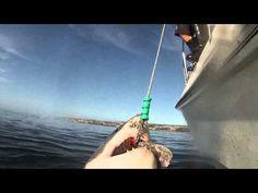 Viral Video: Breaching Great White Shark Photobombs Feeding Friend   Shark Week   Discovery