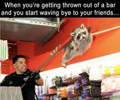 Morning Funny Picture Dump 38 Pics