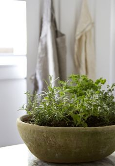 one pot, five herbs | Hmmm I may be more likely to grow herbs if they're all in one pot...
