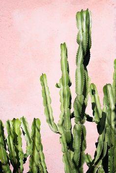 Pastel roze muur met cactus party. // via Hibrid Blog