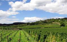 Vineyards of Beaune, France