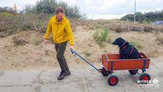 Wohnen im Strandbungalow mit Hund in Holland
