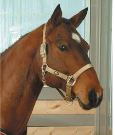 Emergencies: When to Call Your Horses Veterinarian